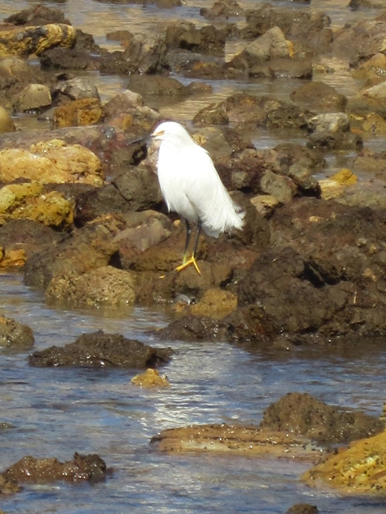 Egret at orange county