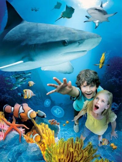 Celebrate Shark Week At Sea Life Aquarium At Legoland