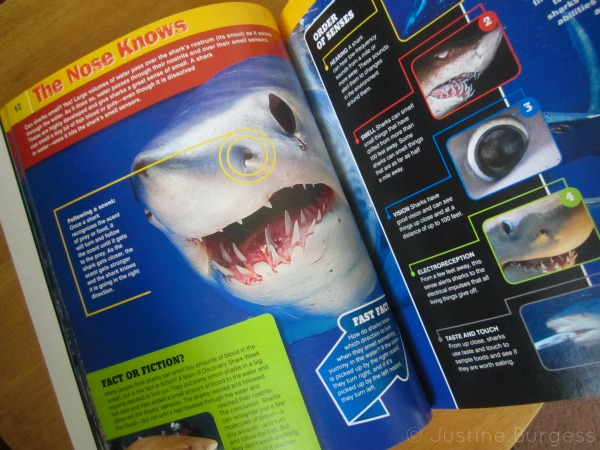 shark week book