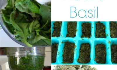 how to freeze fresh basil at home
