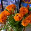 Marigolds at Day of the Dead altar