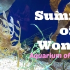 summer-of-wonder-aquarium-long-beach
