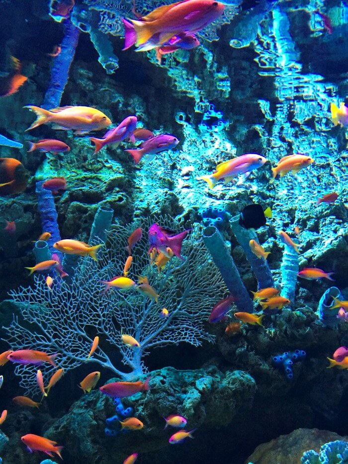 Colorful fish at Aquarium of the Pacific