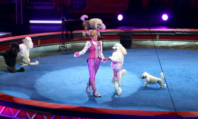 Dog performer at Ringling Bros