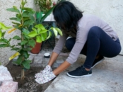 Planting a Tree in the Patio and staying bug-free with OFF!