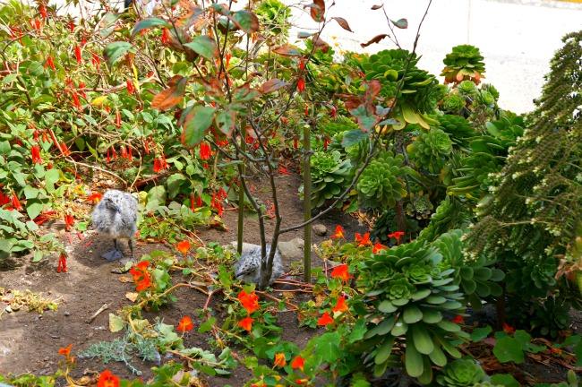 Flowers at Alcatraz // livingmividaloca.com