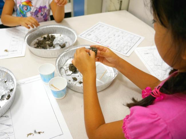 Girl dissecting owl pellets // livingmividaloca.com