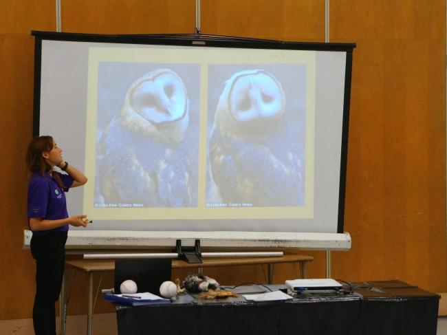 Owl with upside down head // livingmividaloca.com