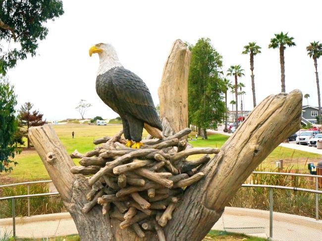 bald-eagle-at-Tomol-Interpretive-Play-Area