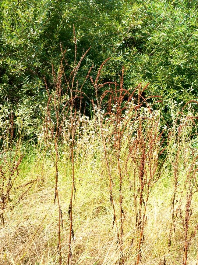 Plants in Carpinteria // LivingMiVidaLoca.com