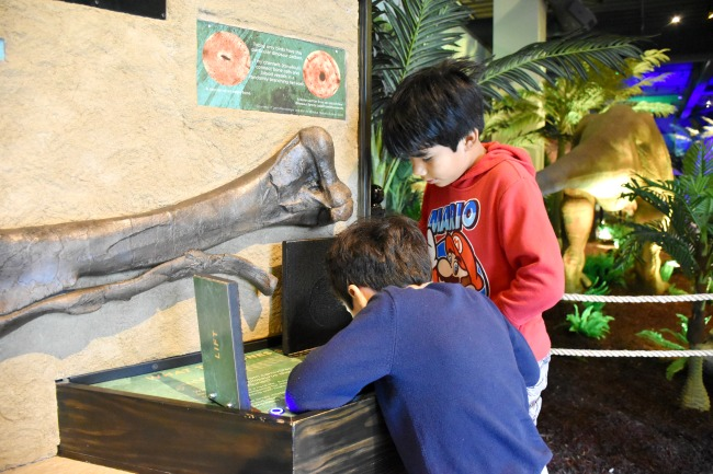 Hands on displays at Extreme Dinosaurs exhibit at Discovery Cube - LivingMiVidaLoca.com (photo credit: Pattie Cordova)