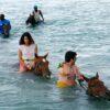 horseback-in-jamaica-water