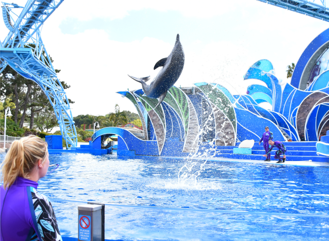 The Dolphin Encounter at SeaWorld - LivingMiVidaLoca.com