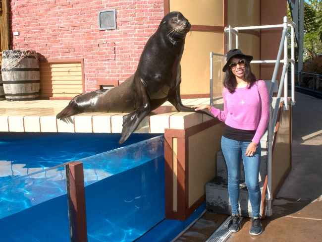 Sea lions live show - LivingMiVidaLoca.com