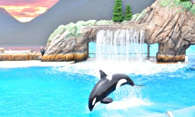 Orca Encounter at SeaWorld San Diego - LivingMiVidaLoca.com