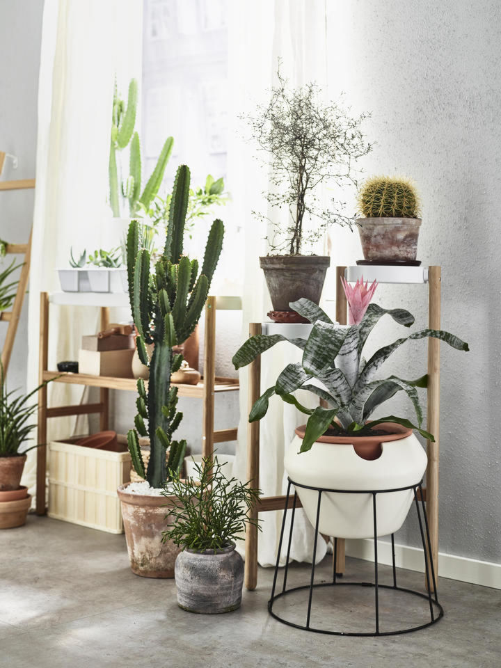 adding live plants to a teachers lounge - LivingMiVidaLoca.com