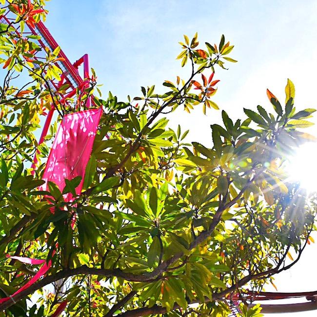 Kite eating trees at Knott's Berry Farm - LivingMiVidaLoca.com