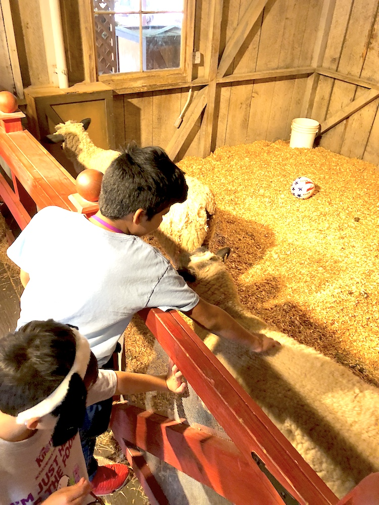 Kids petting the animals at the barn - livingmividaloca.com