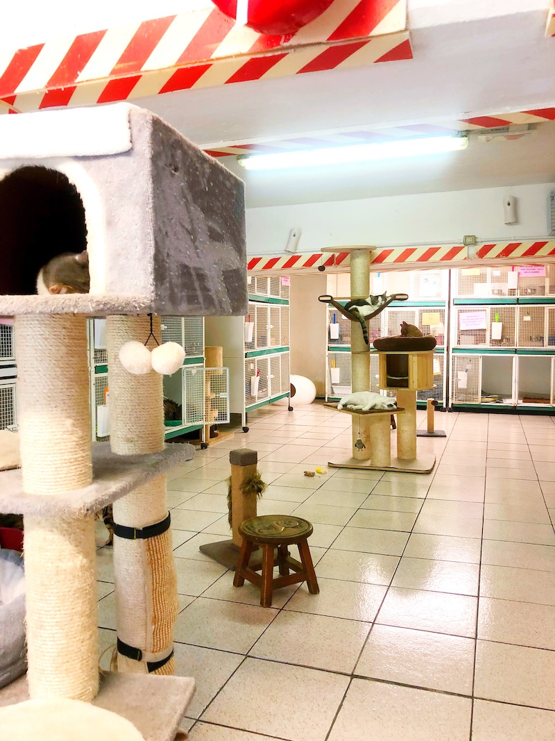 Cat Sanctuary in Rome is open to the public. - livingmividaloca.com - #Gnomads #Travel