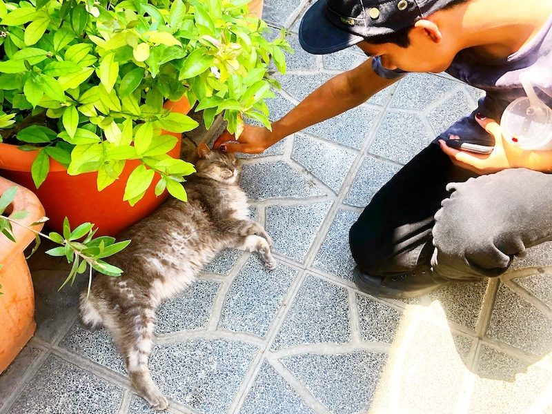 The Torre Argentina Cat Sanctuary in Rome is open to the public and the best place to see and pet roman cats. - livingmividaloca.com - #Gnomads #Travel
