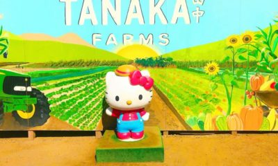 Hello Kitty at Tanaka Farms in Irvine