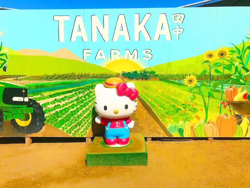 Hello Kitty at Tanaka Farms in Irvine