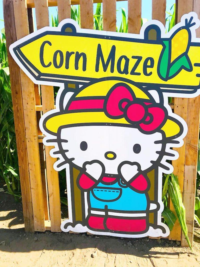 Hello Kitty corn maze at Tanaka Farms