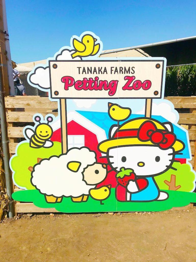 Hello Kitty petting zoo at Tanaka Farms