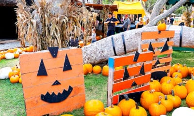 Irvine Park Railroad Pumpkin Patch activity prices, tickets and what to do at the Irvine Park Railroad Pumpkin Patch. - livingmividaloca.com - #LivingMiVidaLoca #LMVLSoCal #OrangeCounty