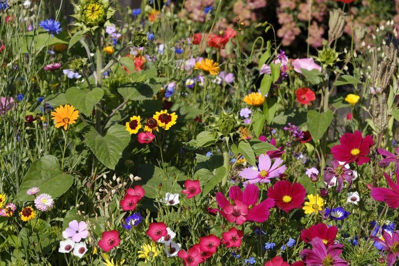 Wildflowers in Bloom in Southern California
