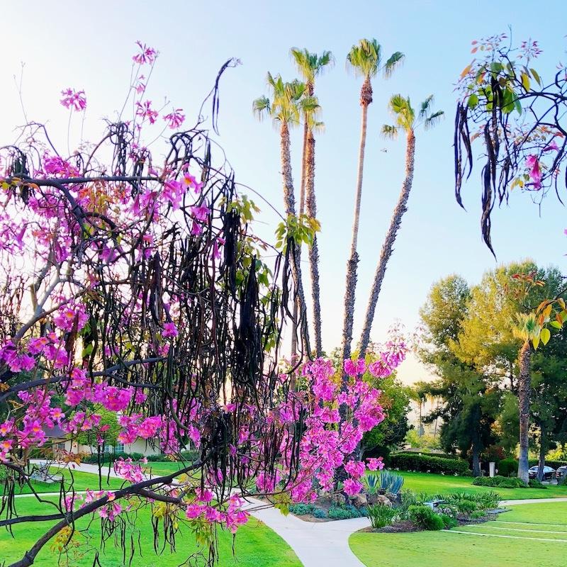Los Angeles travel guide - livingmividaloca.com