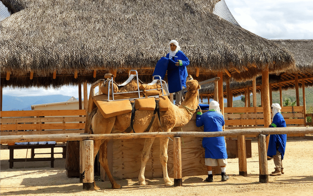 Riding camels in Cabo San Lucas Mexico with Cabo Adventures - livingmividaloca.com