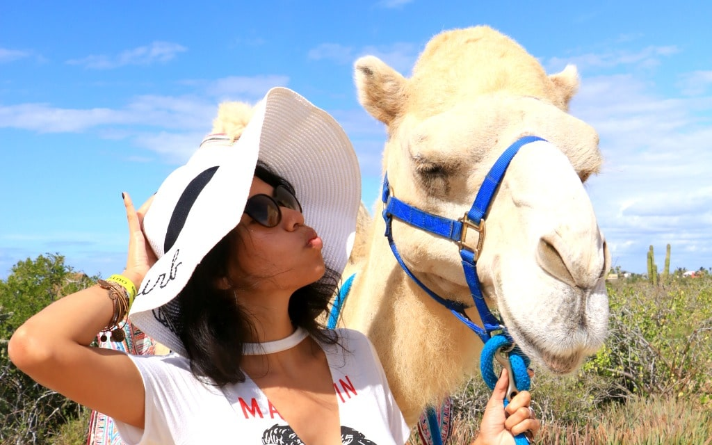 kissing camels in Los Cabos Mexico with Cabo Adventures