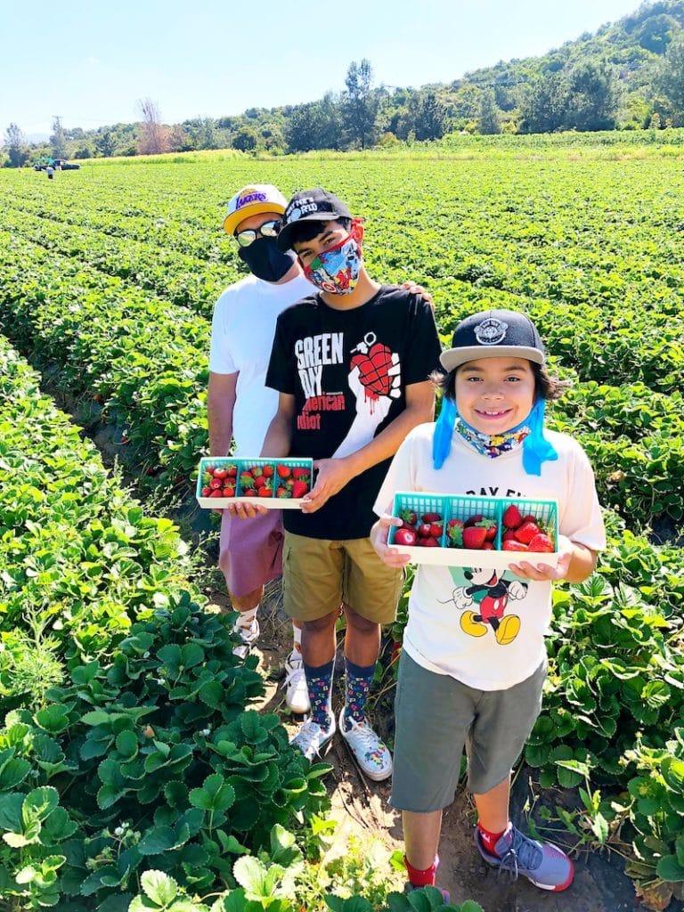u-pick strawberries at South Coast Farms - livingmividaloca.com