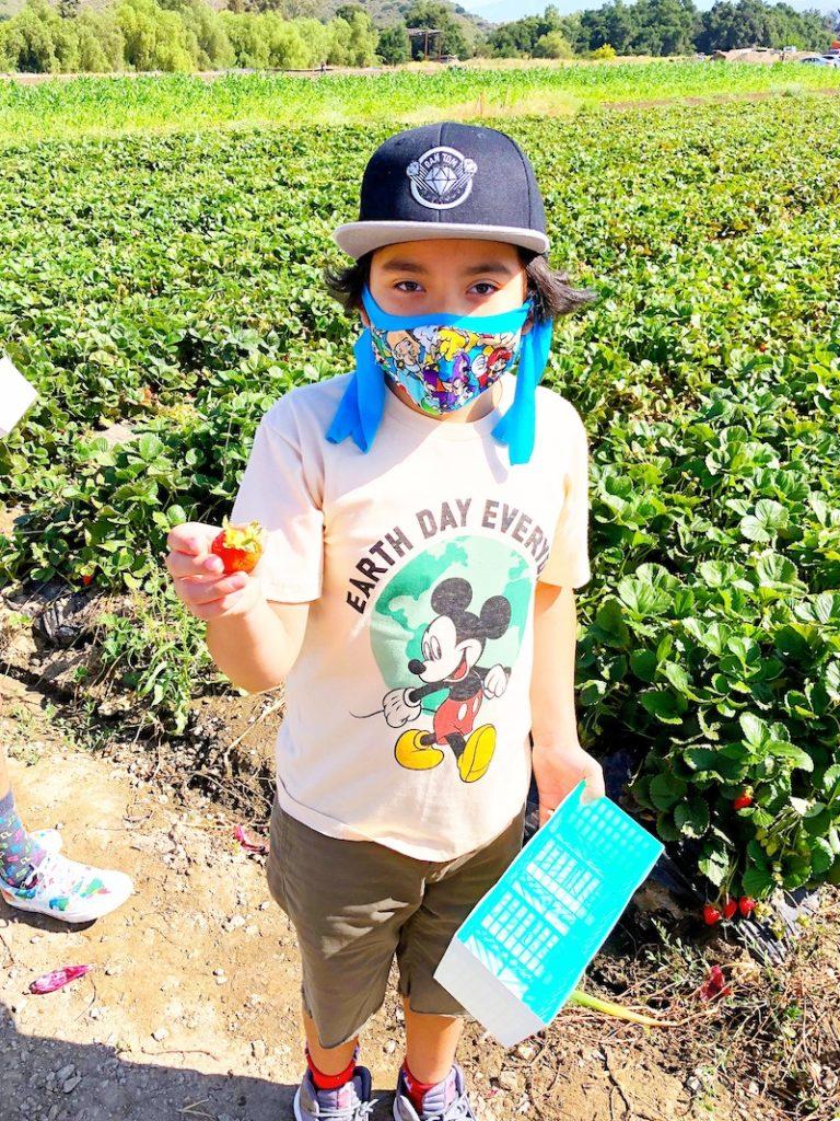 Latino boy picking strawberries at South Coast Farms - livingmividaloca.com