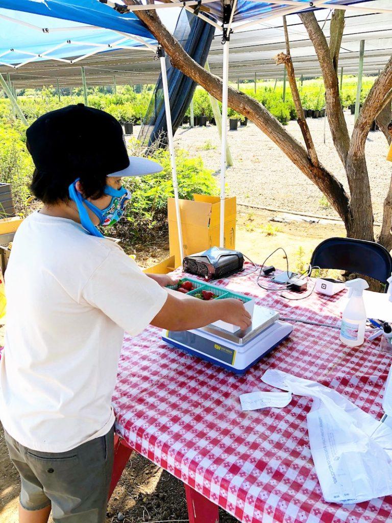 Paying for strawberries at South Coast Farms - livingmividaloca.com