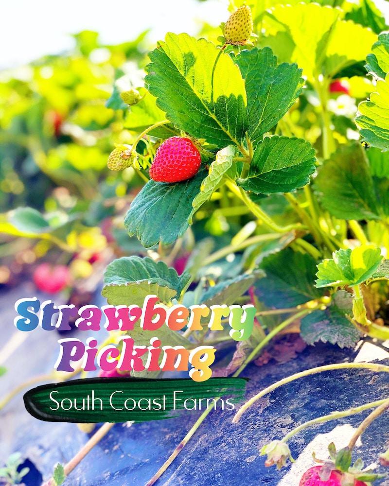 South Coast Farms in San Juan Capistrano - livingmividaloca.com