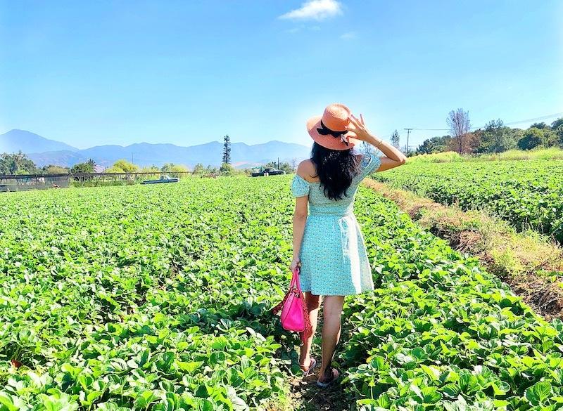 Strawberry Picking in San Juan Capistrano at South Coast Farms - livingmividaloca.com