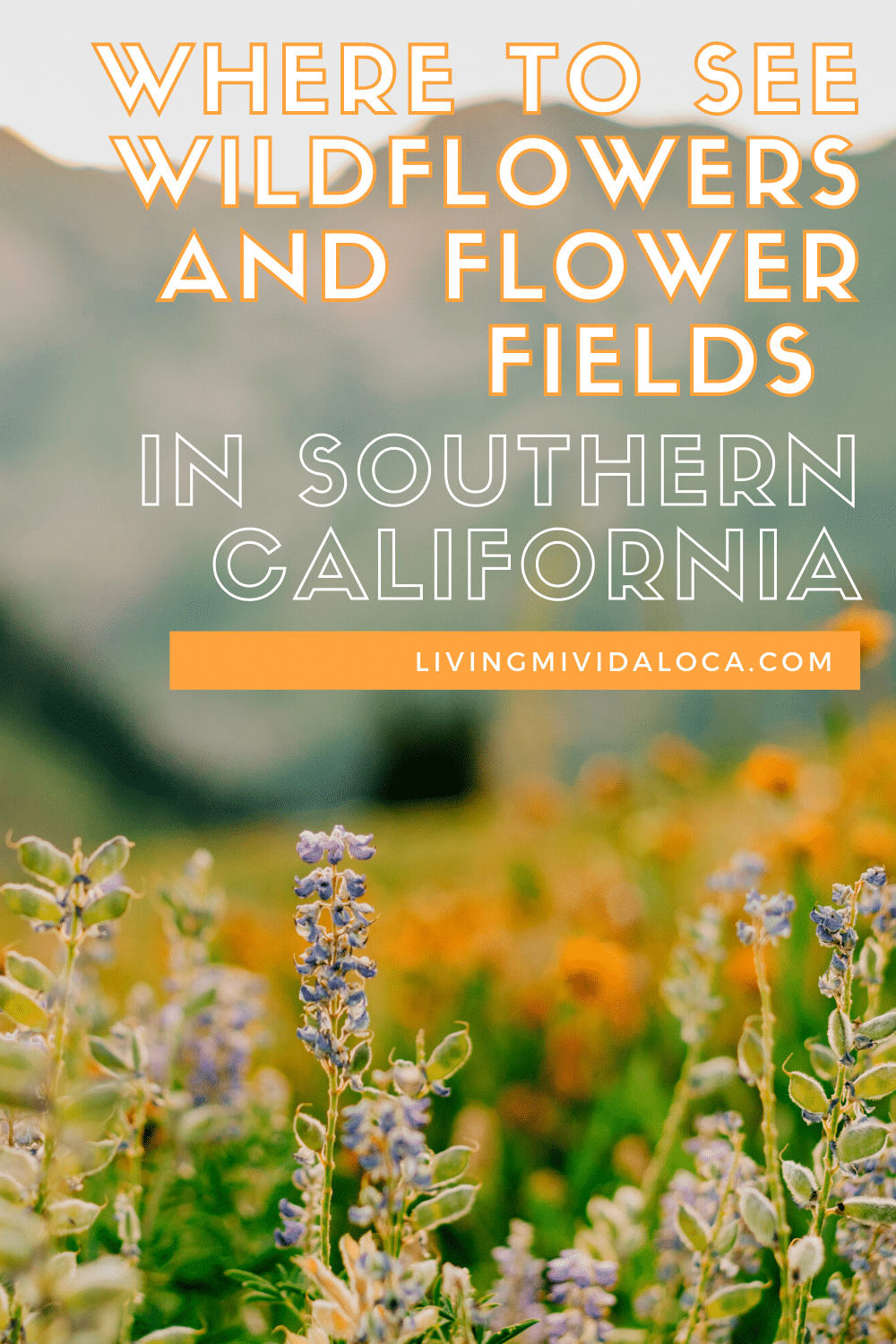 Where to see wildflowers and flower fields in Southern California - livingmividaloca.com