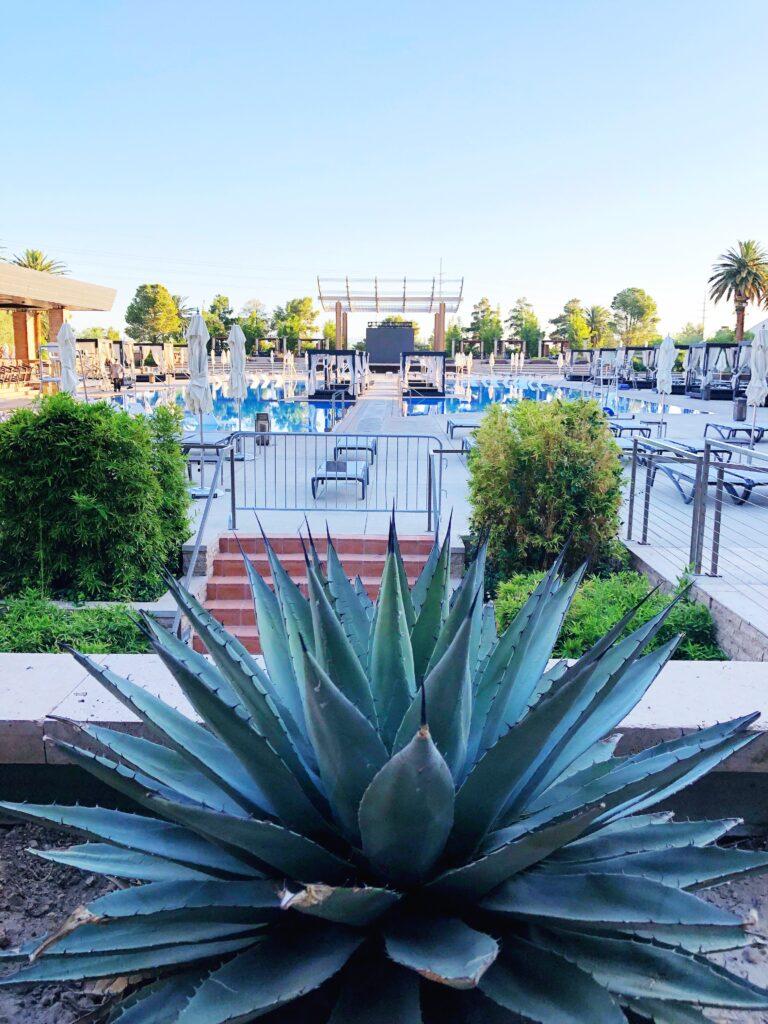 Pool at M Resort Hosts Concerts