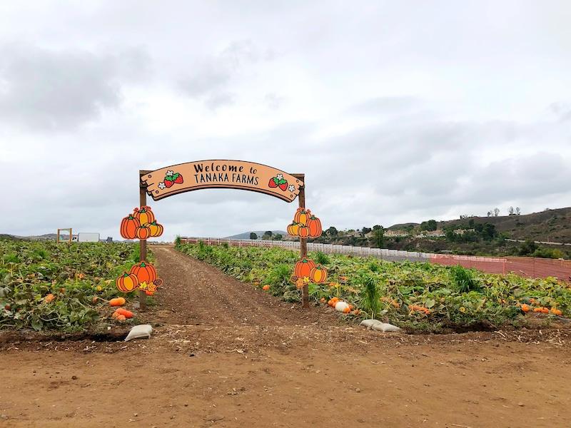 Tanaka Farms pumpkin patch in Irvine California - livingmividaloca.com