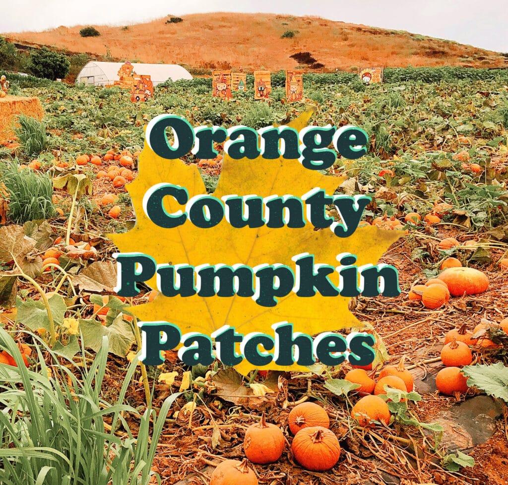 Orange County pumpkin patches - livingmividaloca.com